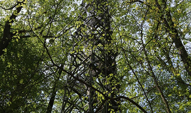 NEON project site showing a tower among the trees