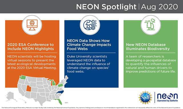 NEON spotlight August 2020