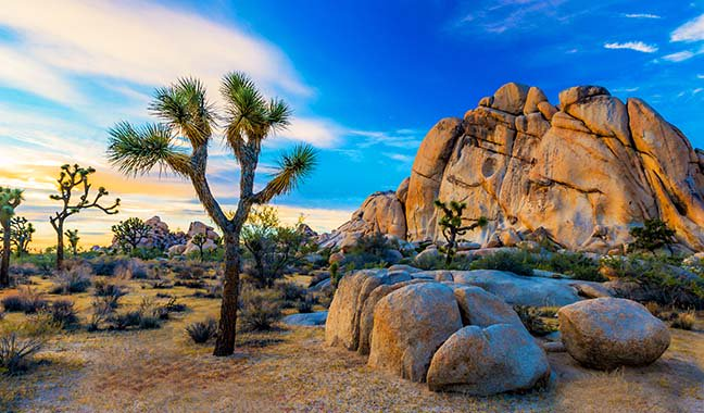 photo showing nature surrounding Palm Springs